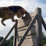 صورة تدريب الكلاب