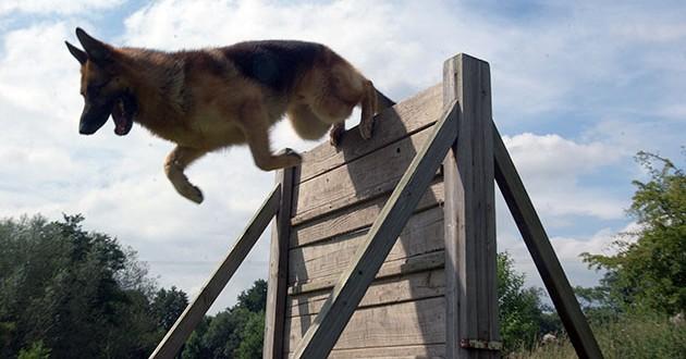 أفضل تطبيقات تدريب الكلاب وتربيتها